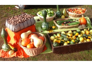 courges; noix; courgettes; tomates; les vergers de kethevane; kethevane letrange