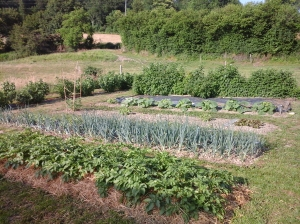 les vergers de kéthévane; kethevane letrange; charbonnat; morvan; jardin; produits naturels